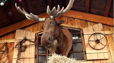 Chris Moose Birmingham Christmas Market
