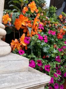 Birmingham flowers 1