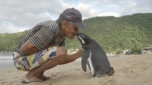 Dindim the penguin