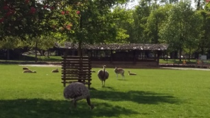 Deer and ostriches at Parc de la Tête d'Or