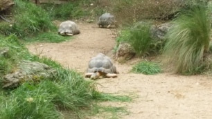 Tortoises at Parc de la Tête d'Or zoo