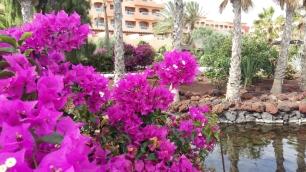 hotel-elba-sara-grounds
