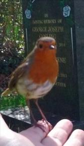 Robin at graveside