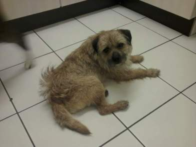 Rufus dog 2