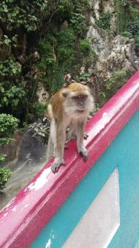 Batu Caves Macaque monkey on handrail