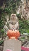 Batu Caves Macaque monkey on pillar