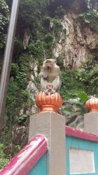 Batu Caves Macaque monkey yawning