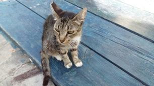 Cat in Stoupa