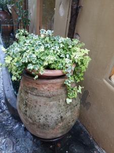 Positano plants