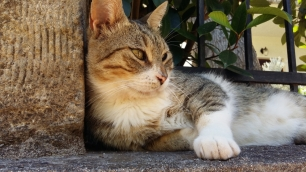 Stoupa cat close up