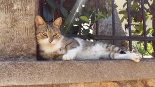 Stoupa cat