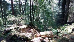 Gwydyr Forest Betws y Coed 1