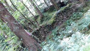 Gwydyr Forest Betws y Coed 2