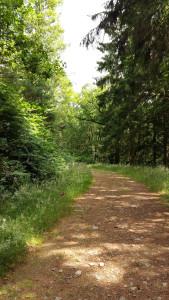 Gwydyr forest path Betws y Coed