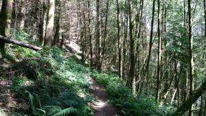 Gwydyr forest path walk Betws y Coed