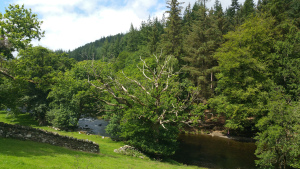 River and trees Betws y Coed