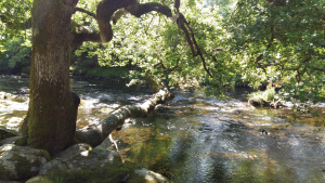 River Llugwy and fallen trees Betws y Coed
