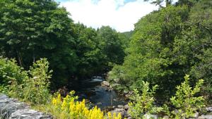 River Llugwy flowing through trees Betws y Coed