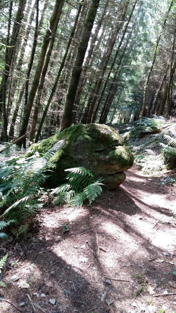 Rock looks like a face Gwydyr Forest Betws y Coed