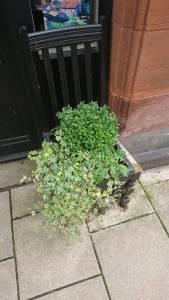 Moffat chair planter